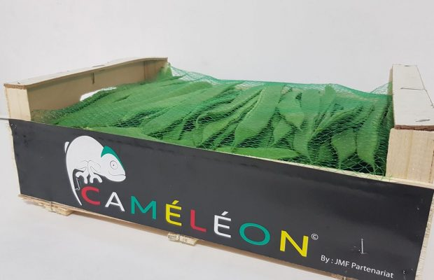 Haricots-coco-plat-Caméléon
