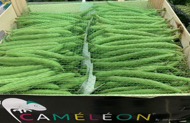 Haricot-vert-Caméléon