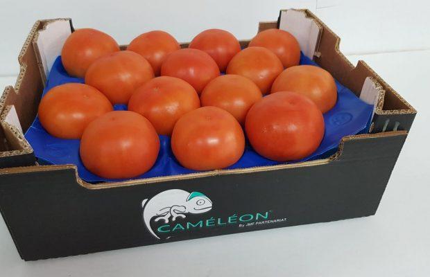 Tomate-ronde-Caméléon